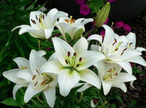 Bunga Pengertian Bagian Bagian Jenis Dan Fungsinya Lengkap