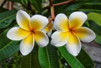 Bunga Pengertian Bagian Bagian Jenis Dan Fungsinya Lengkap Penjaskes Co Id