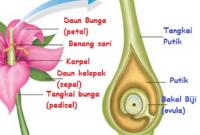 Bunga Karakteristik Dan Fungsi Terlengkap Penjaskes Co Id