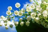 Download 8500 Gambar Bunga Bunga Paling Indah HD Terbaru