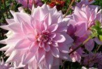13 Bunga Paling Indah Di Dunia Beserta Gambarnya Terlengkap Penjaskes Co Id