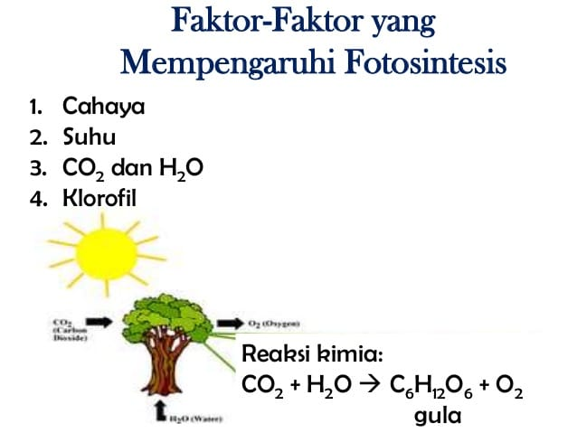 6 Faktor yang Mempengaruhi Fotosintesis dan Pengertiannya..