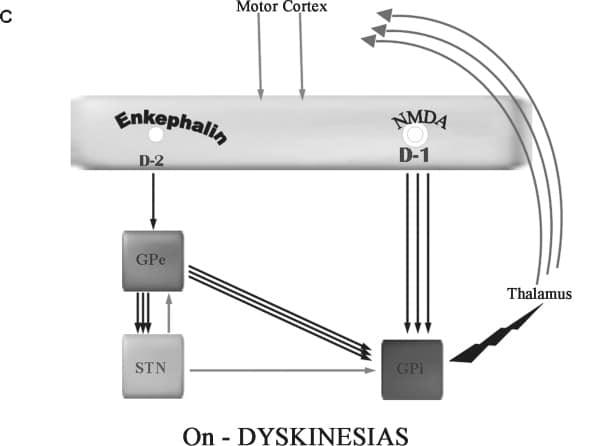 Hormon Enkephalin : Pengertian, Cara Kerja dan Fungsinya ...