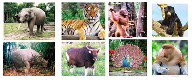 72 Gambar Hewan Hewan Lengkap Gratis