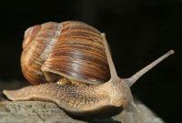 Ciri Ciri Mollusca Brainly Biology Co Id