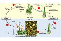37+ Reproduksi vegetatif pada hewan brainly terbaru